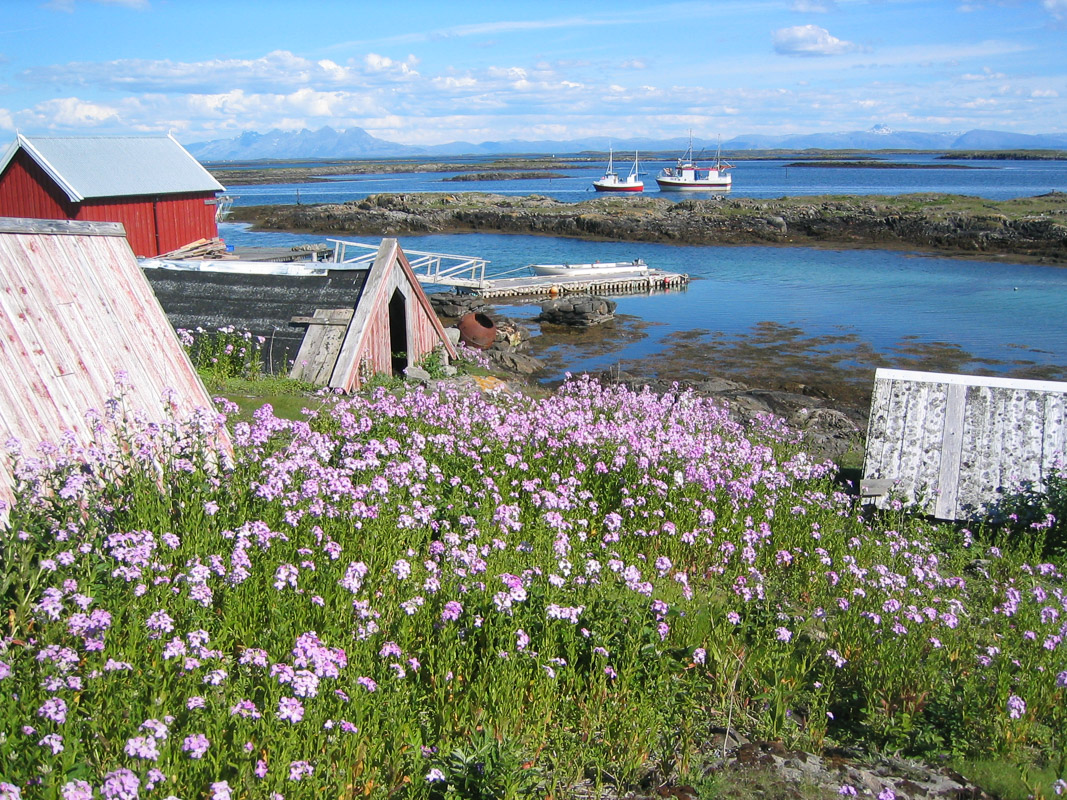 Little houses on the island of Vega are built for the eider ducks, that live in symbiosis with the islanders © Helgeland Reiseliv