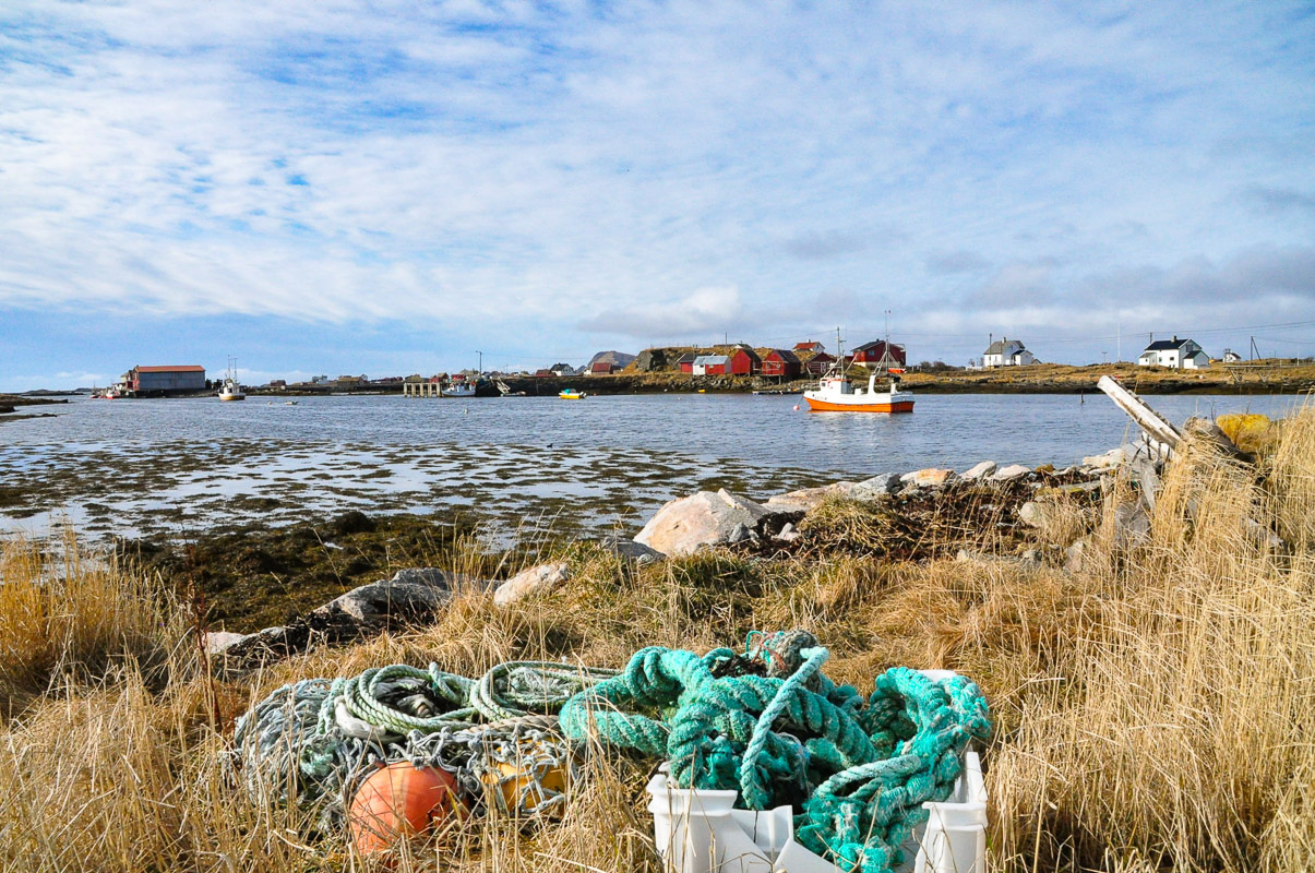Røstlandet lies in the middle of the Gulf Stream, so watch the seaweed flow by (c) Knut Hansvold