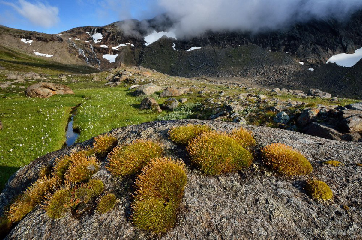 Okstindan is a high altitude area with snow patches even in summer (c) Fabrice Milochau