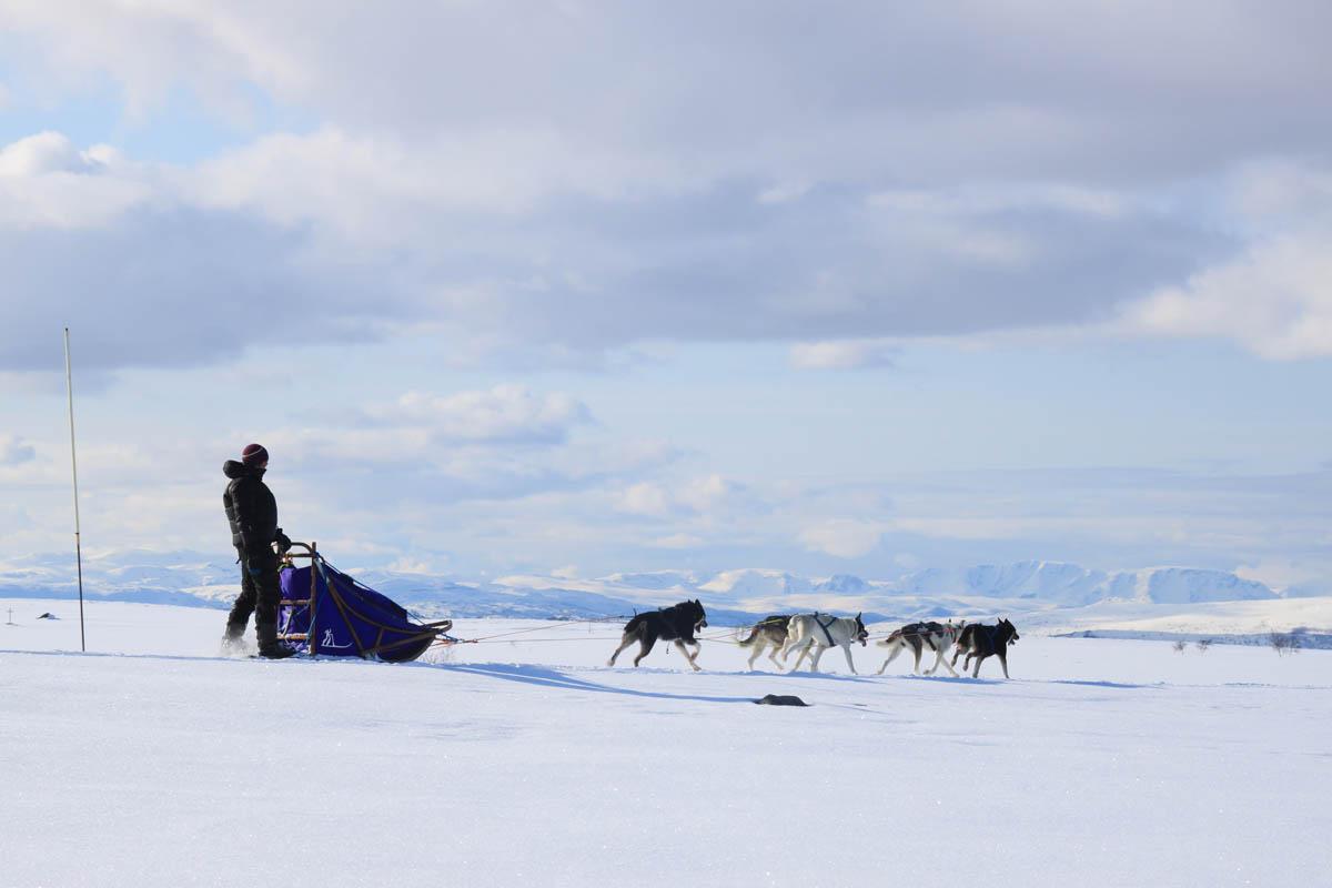 En av Finnmark sine utallige panoramaer (C) Trasti og Trine