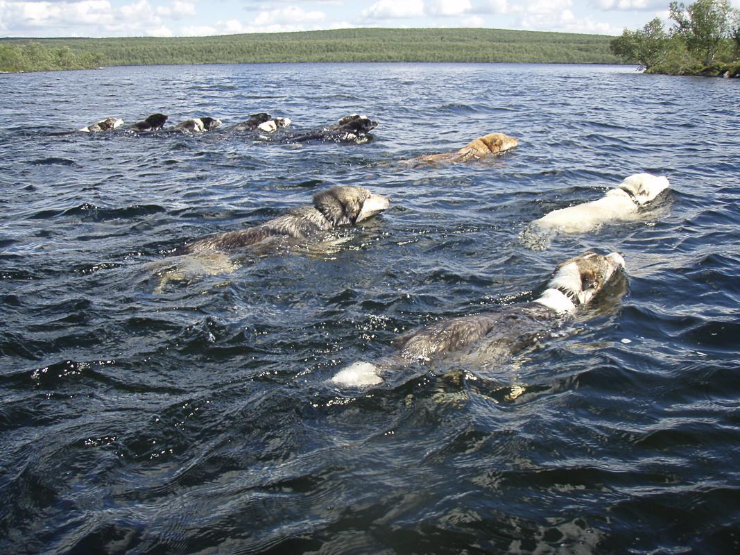 Hunder må trene om sommeren også © www.engholm.no