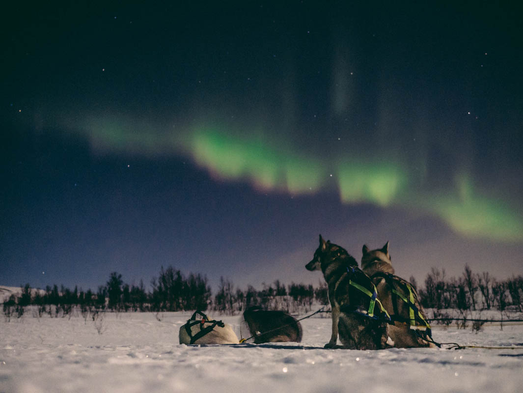 In Alta you can go dogsledding and hunt for the Northern Lights © Trasti og Trine