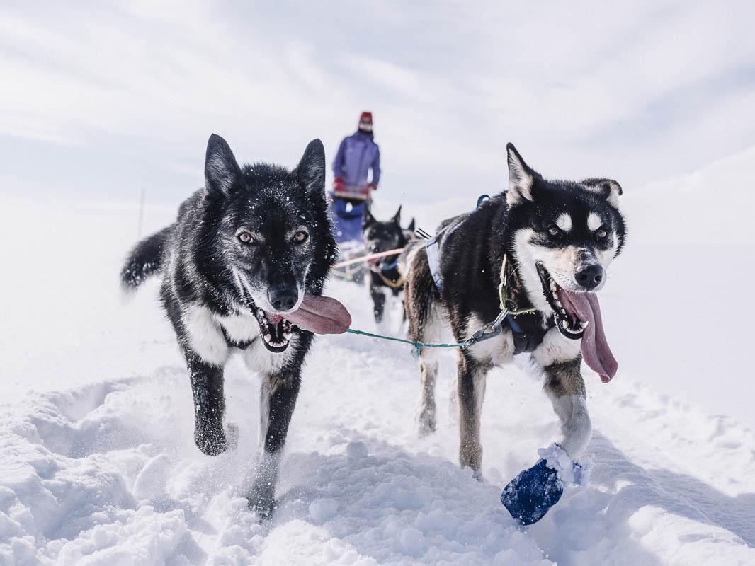 Hunder på tur © Trasti og Trine