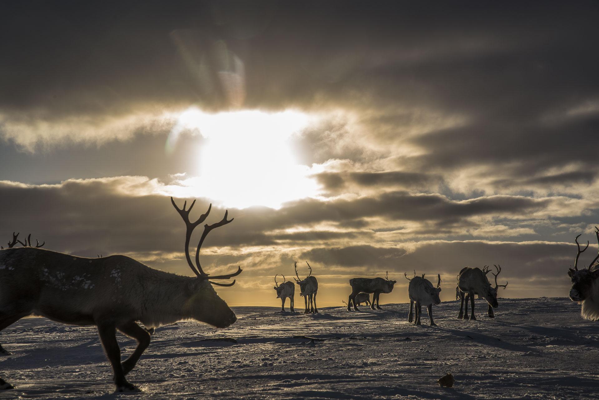 Møte med dem som er på vidda hele vinteren © Liv Engholm, Turgleder