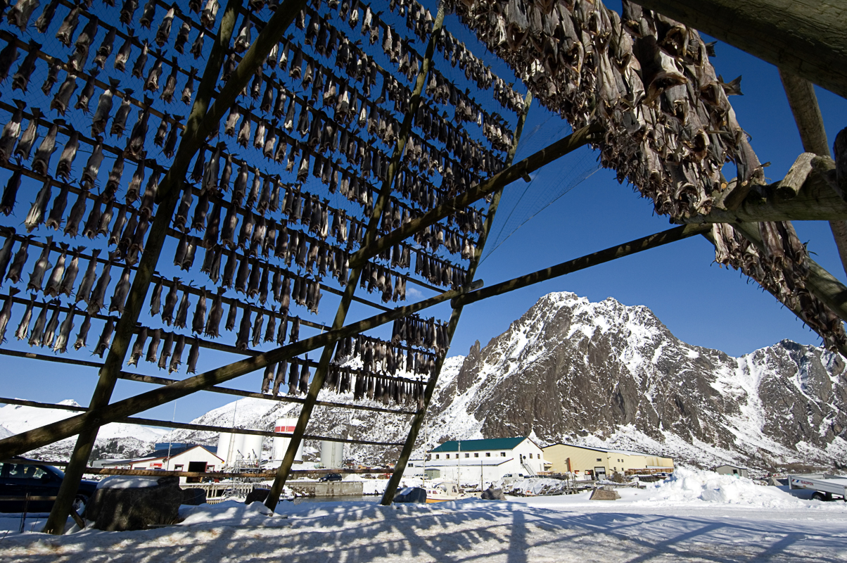 Even today you can find multiple active racks of stockfish all along the coast of Northern Norway © Terje Rakke
