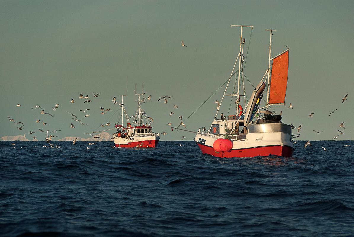 Måsen gleder seg over stor fangst på yttersida av Senja © Reiner Schaufler