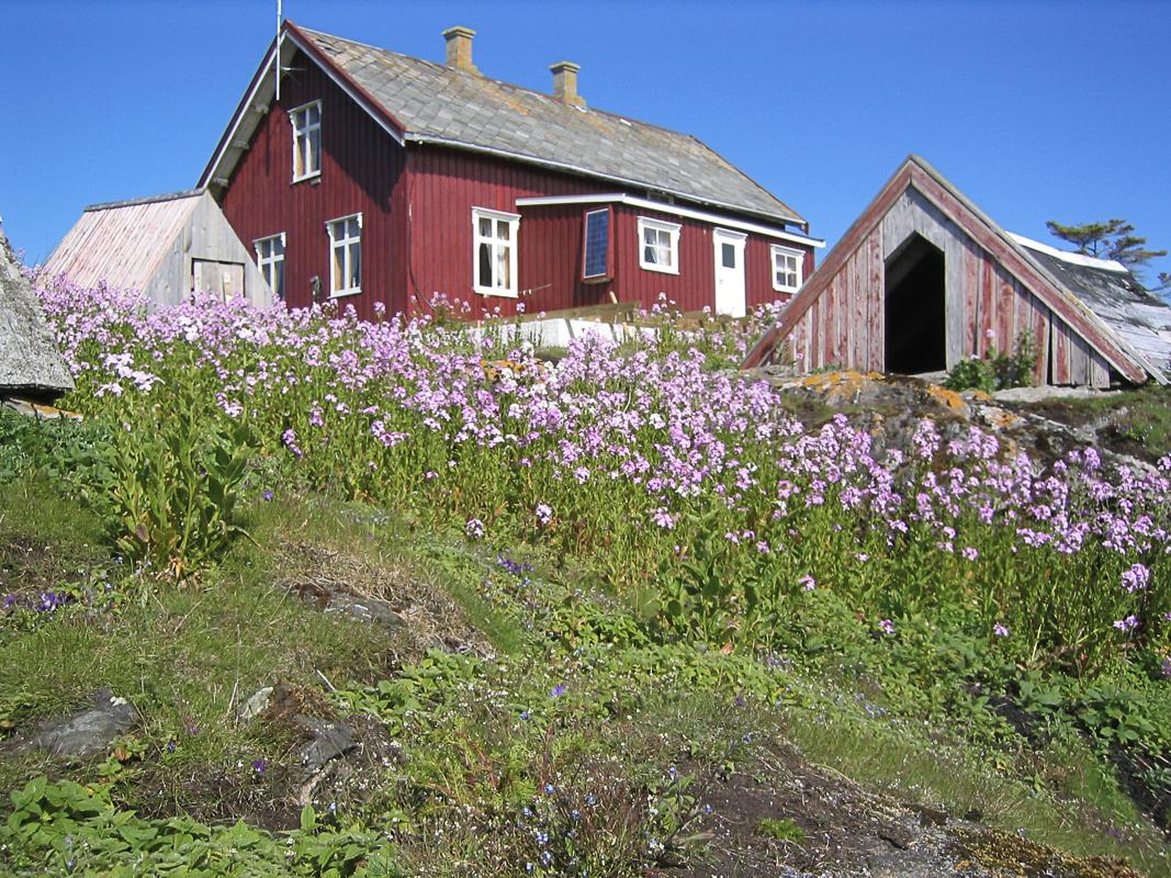 Sommerlig dunvær med ebane (c) Helgeland Reiseliv