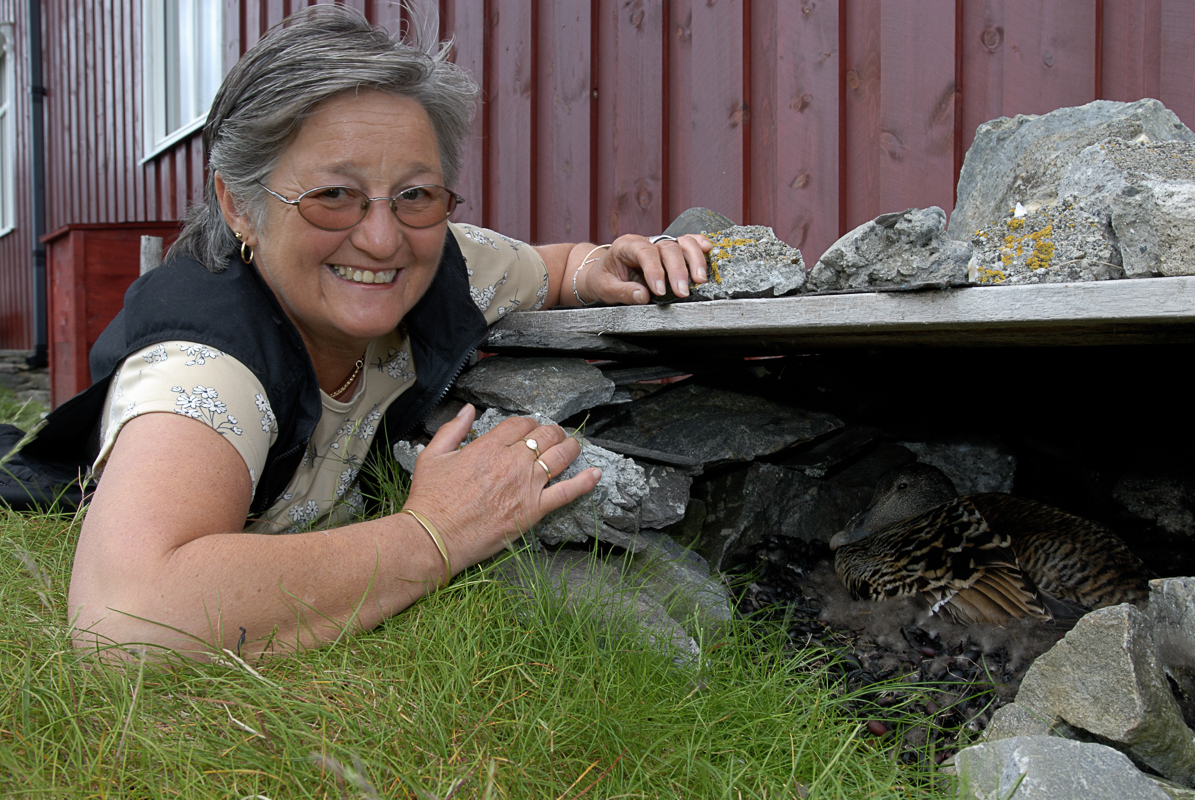 Dunkjerringa viser fram ea på egg, på Lånan, en av de mange øyene (c) Helgeland Reiseliv