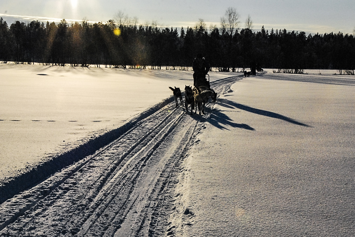 Hundene følger sporene fint når de er ute og løper med slede © Knut Hansvold