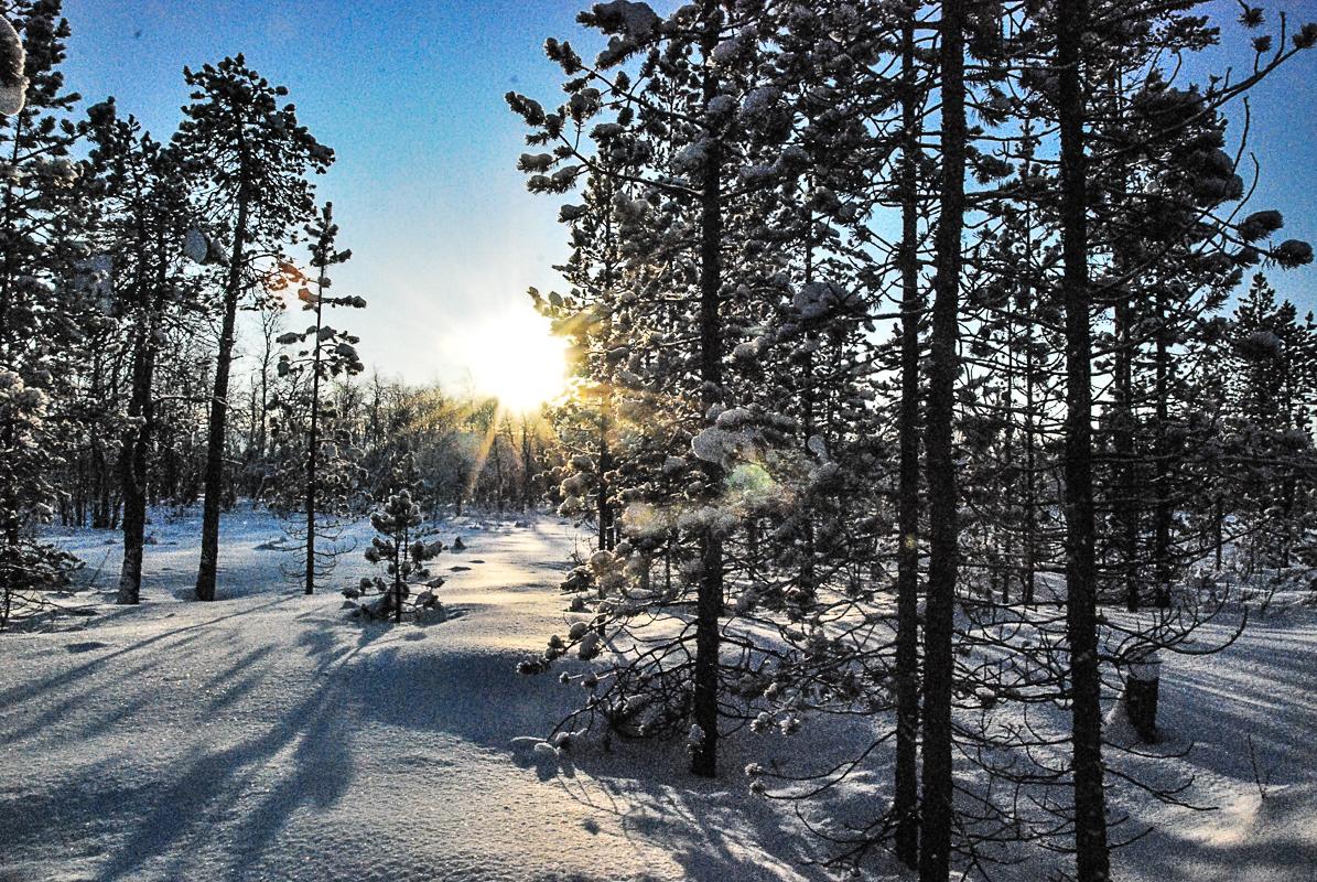 Lyset i skogen © Knut Hansvold