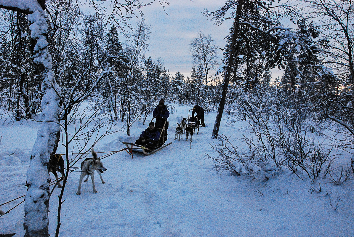 Dog sledding in the forest that is solidly frozen in winter © Knut Hansvold