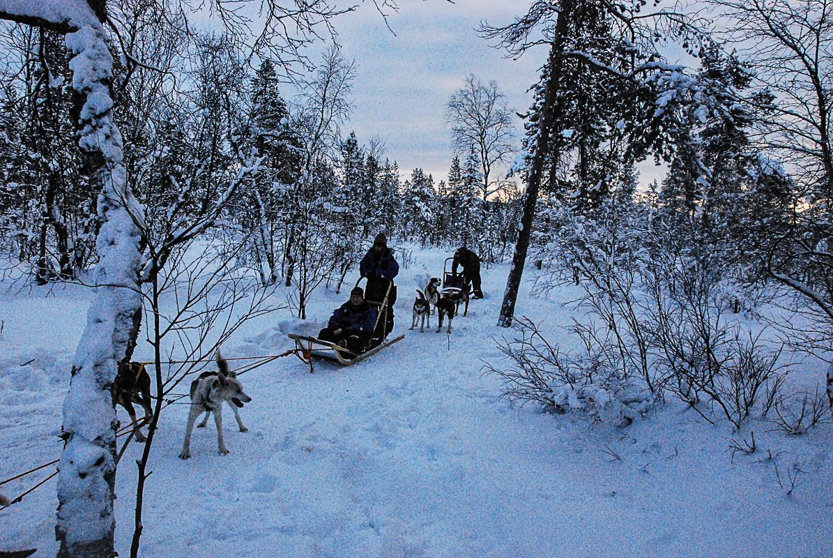 Hundekjøring i Kirkenes er morsomt for hele familien © Knut Hansvold