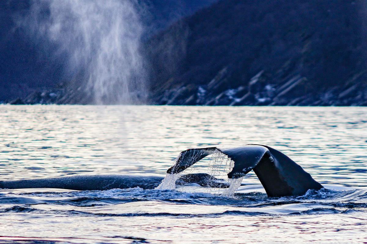 Synet av de enorme dyrene glemmer du aldri © Francisco Damm