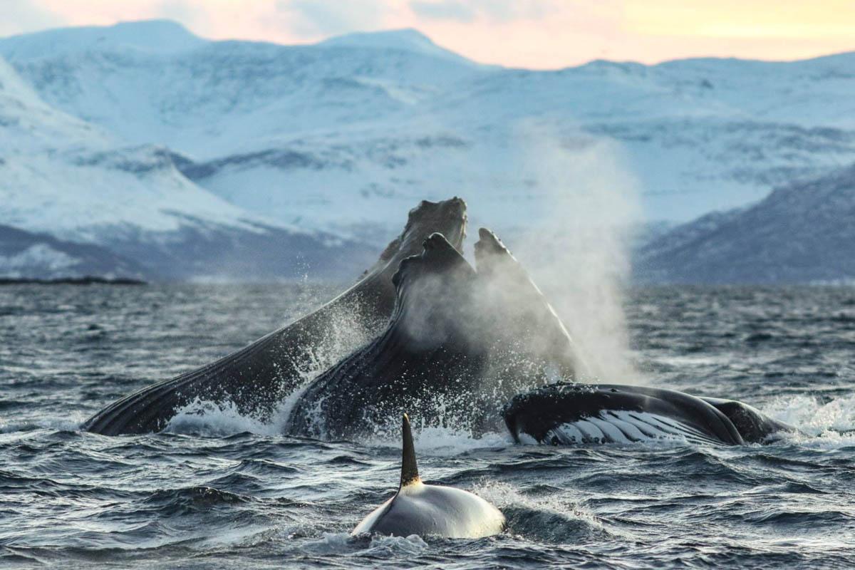 Havet koker! © Francisco Damm