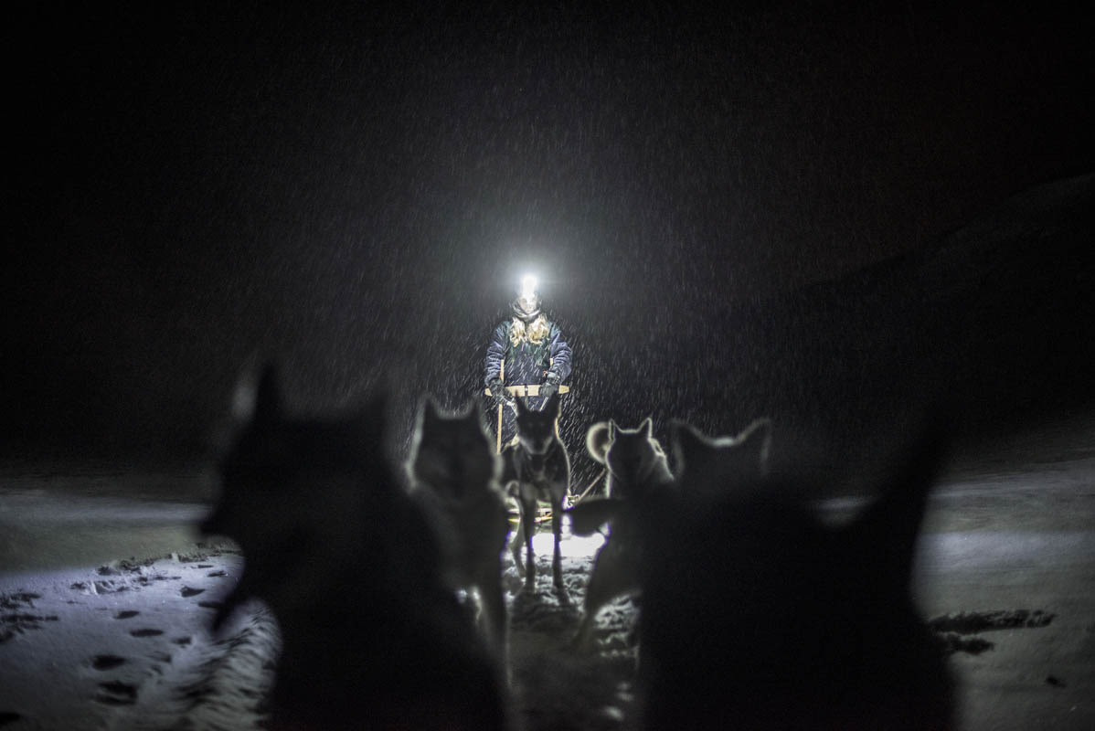 Dog sledding team on an adventure into the wilderness © Piotrek-Damski