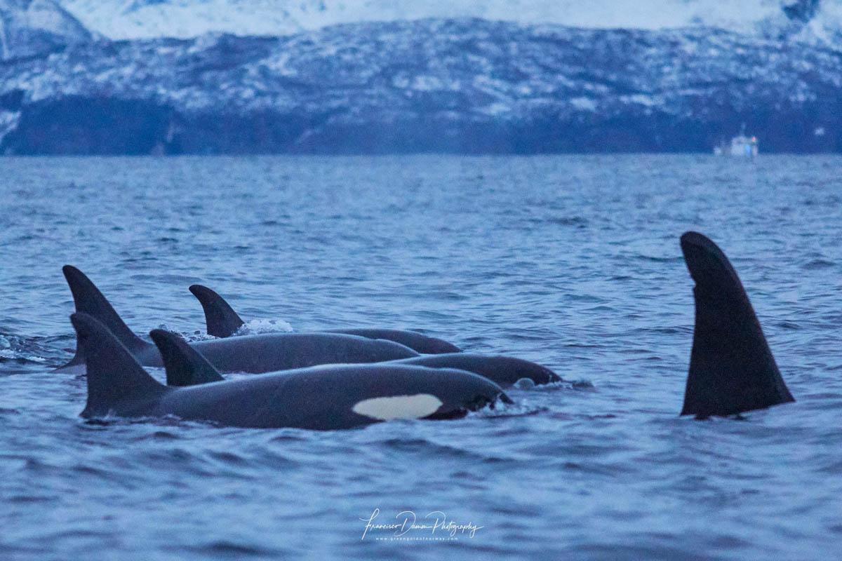 Kjenner du igjen arten? © Francisco Damm