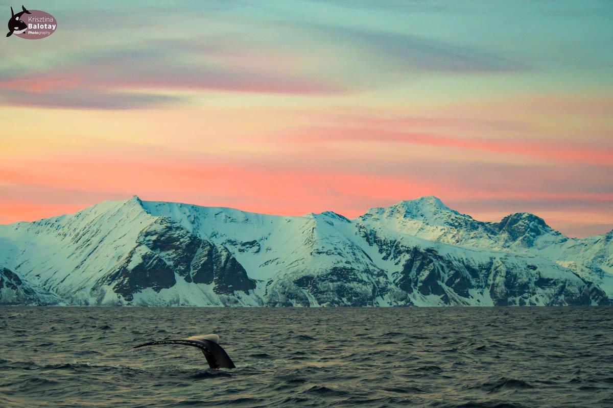 Hvalen går ned med solen © Krisztina Bolotay