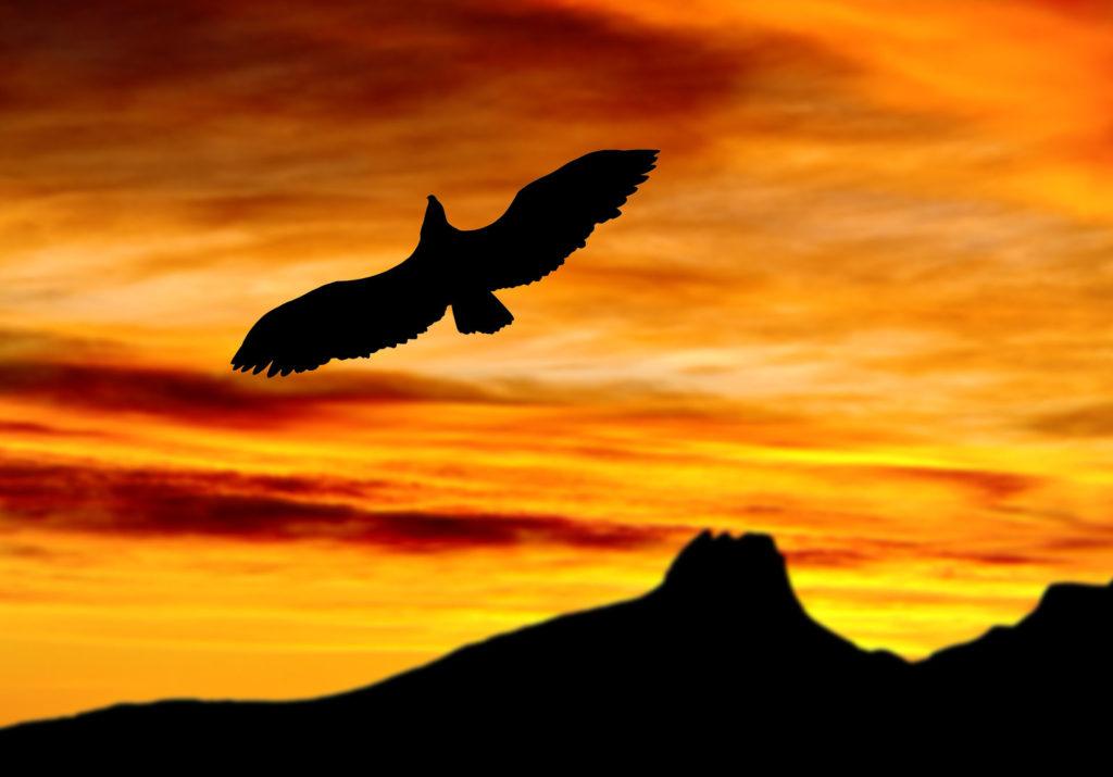 Fugl i midnattssol i nord norge