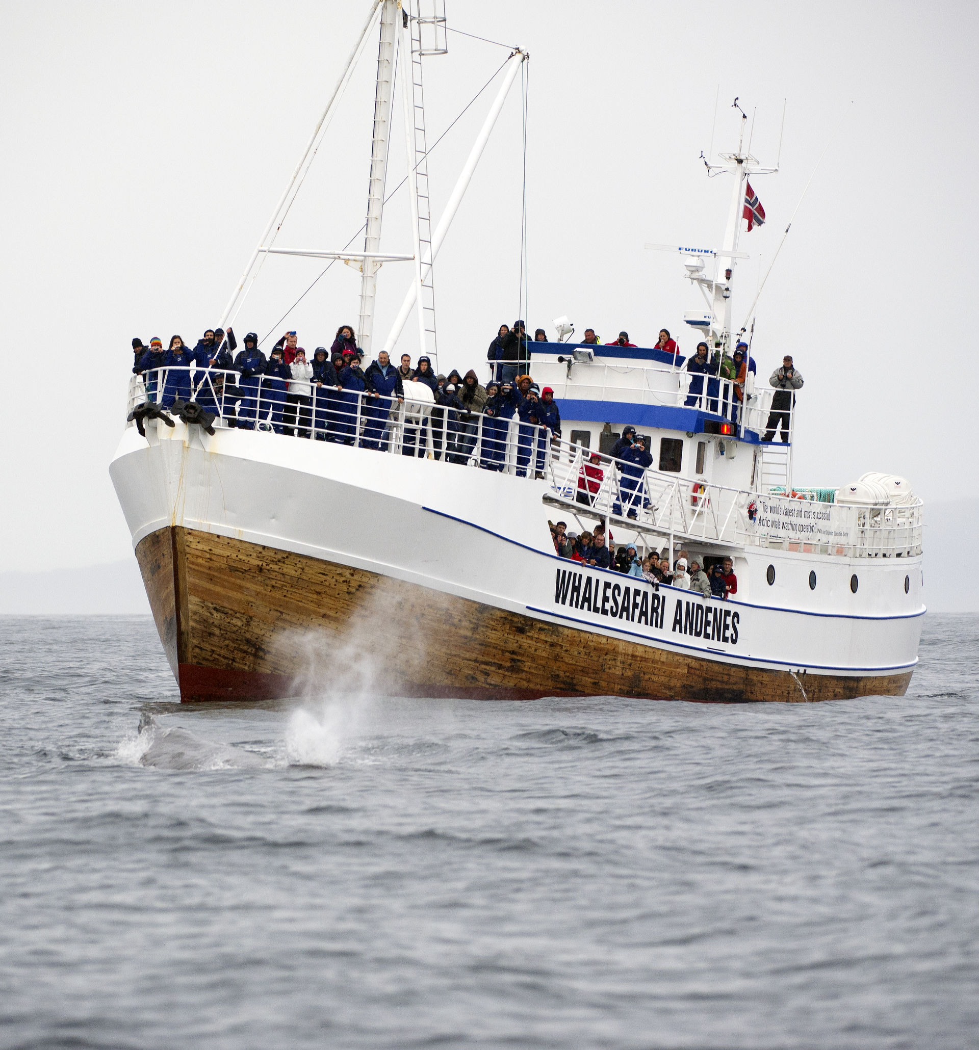 Whale watching are one of the most popular activites on Andøya © Marten Bril