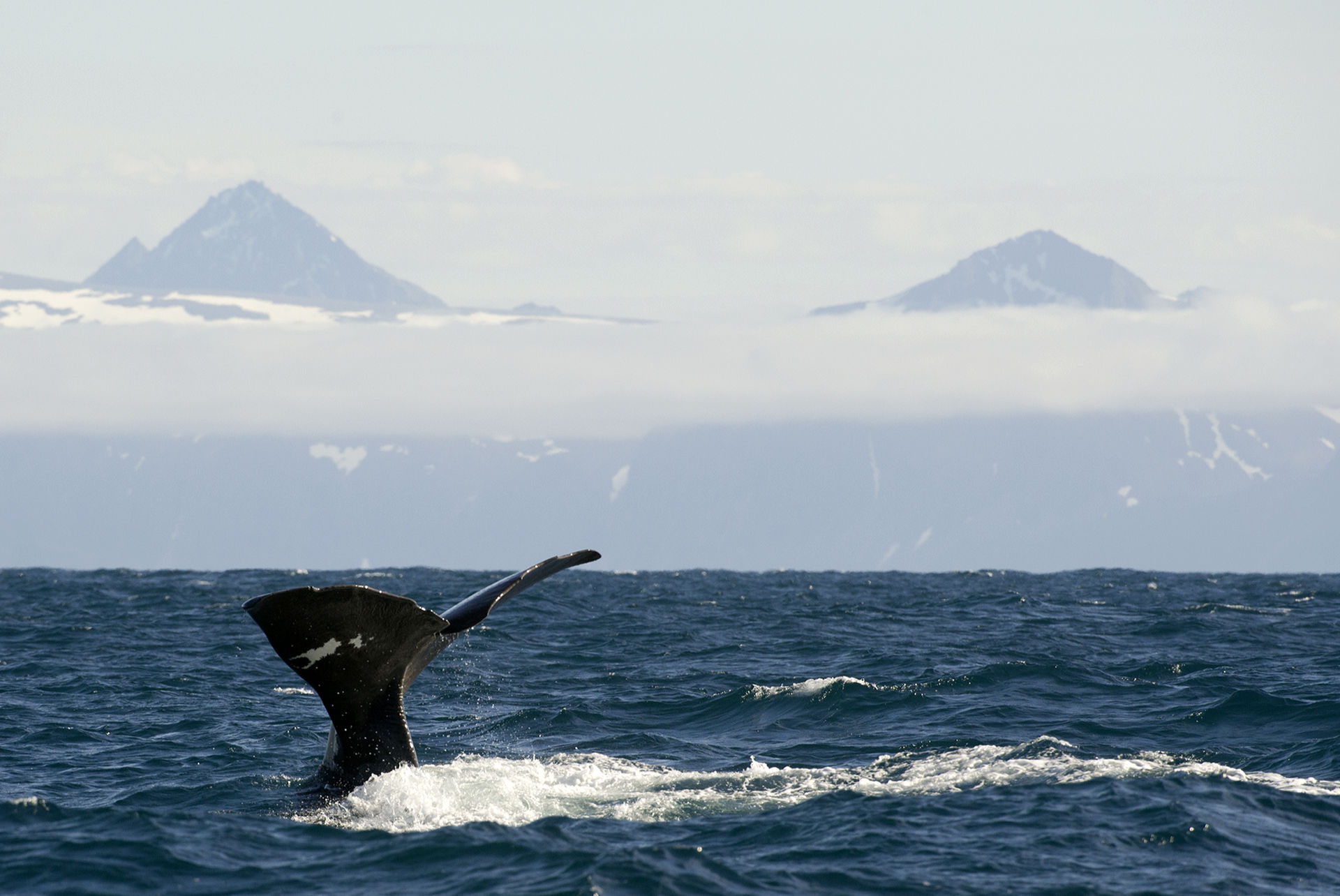 Whales outside of Andøya © Marten Bril