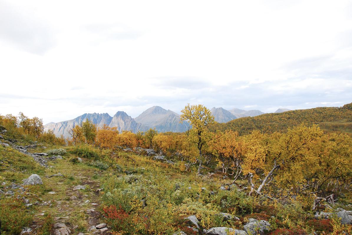 Tidlige høstfarger i enkelt terreng © Knut Hansvold