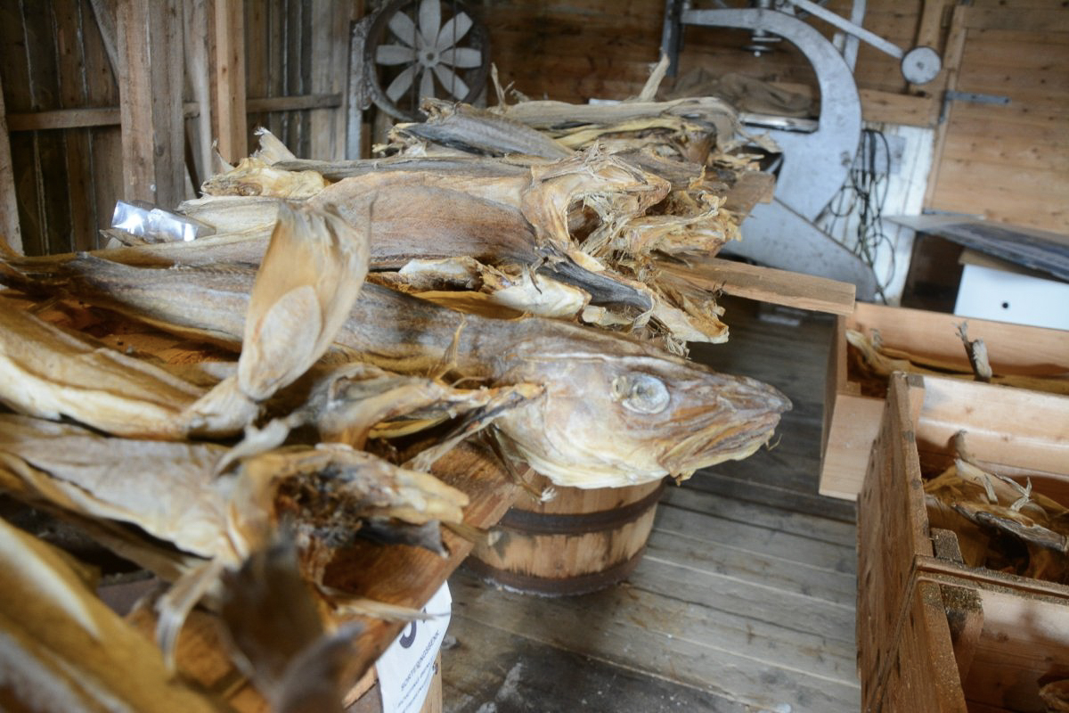 Stockfish have been traded for a long time in Northern Norway © Knut Hansvold Lofoten Stockhfish Museum
