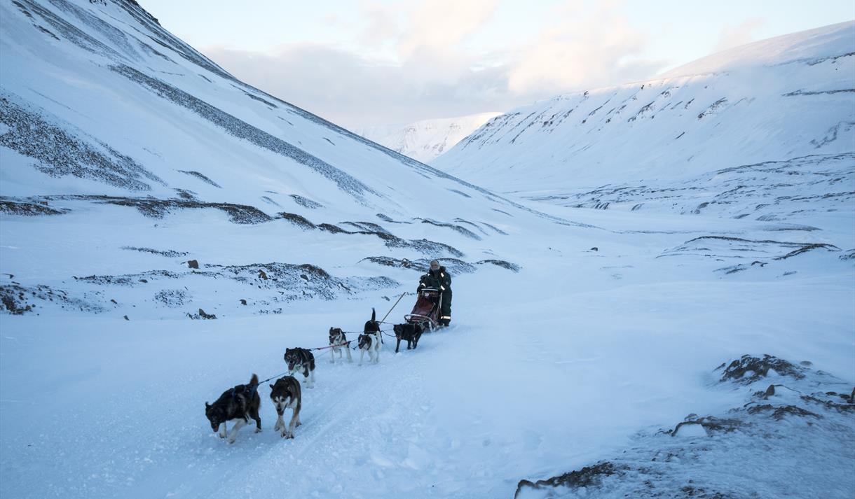 Hundekjøring i magisk landskap © Ella Pellegrini