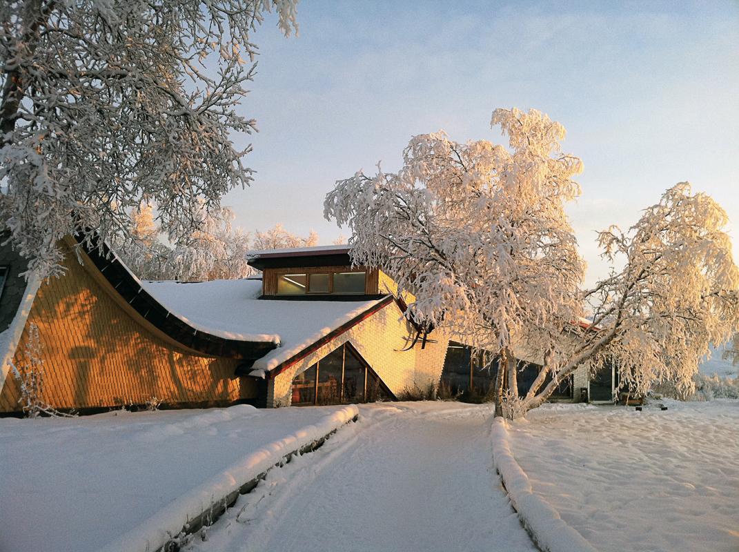 Between birch and pine © Knut Hansvold