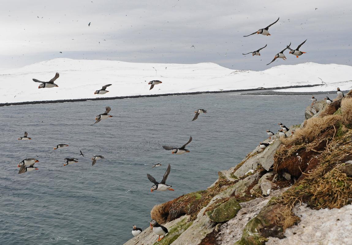 Lunde på Hornøya (c) Biotope