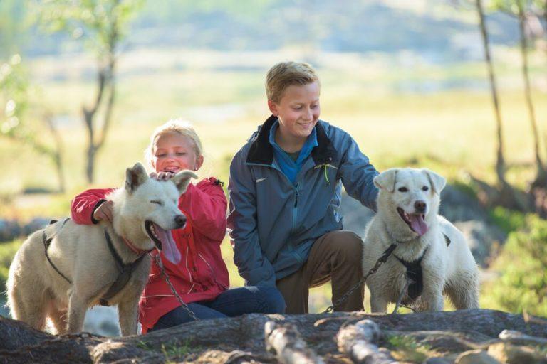 Hundekjøring kan også gjøres på sommeren © CH
