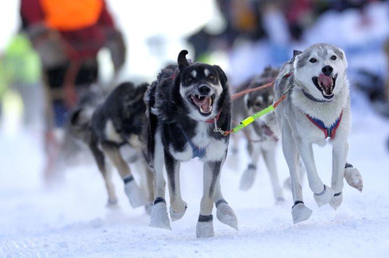 Finnmarksløpet er en årlig konkurranse for verdens beste hundekjørere © Casper Tybjerg