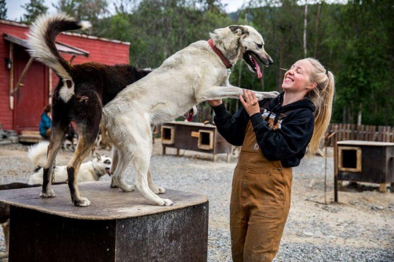 En av hundene til Trasti og Trine i Alta © Sara Johannessen