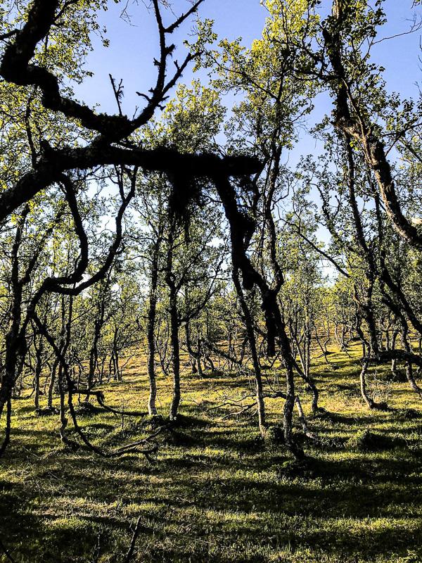 Forests and fields in Bardu ©Jevningen Gard og Husky