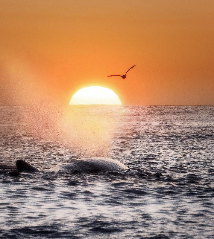Seint i juli dypper sola ned i havet ved Andenes. Lurer på om hvalen vet det? © Marten Bril