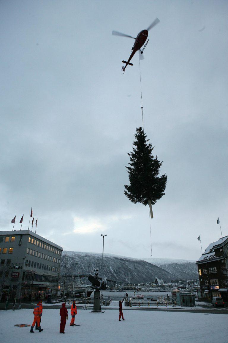 Men først må det hogges. Dette treet ble gitt som gave av en pensjonist i Tromsdalen, som sikkert syns det var greit å bli kvitt det © Yngve Olsen Sæbbe