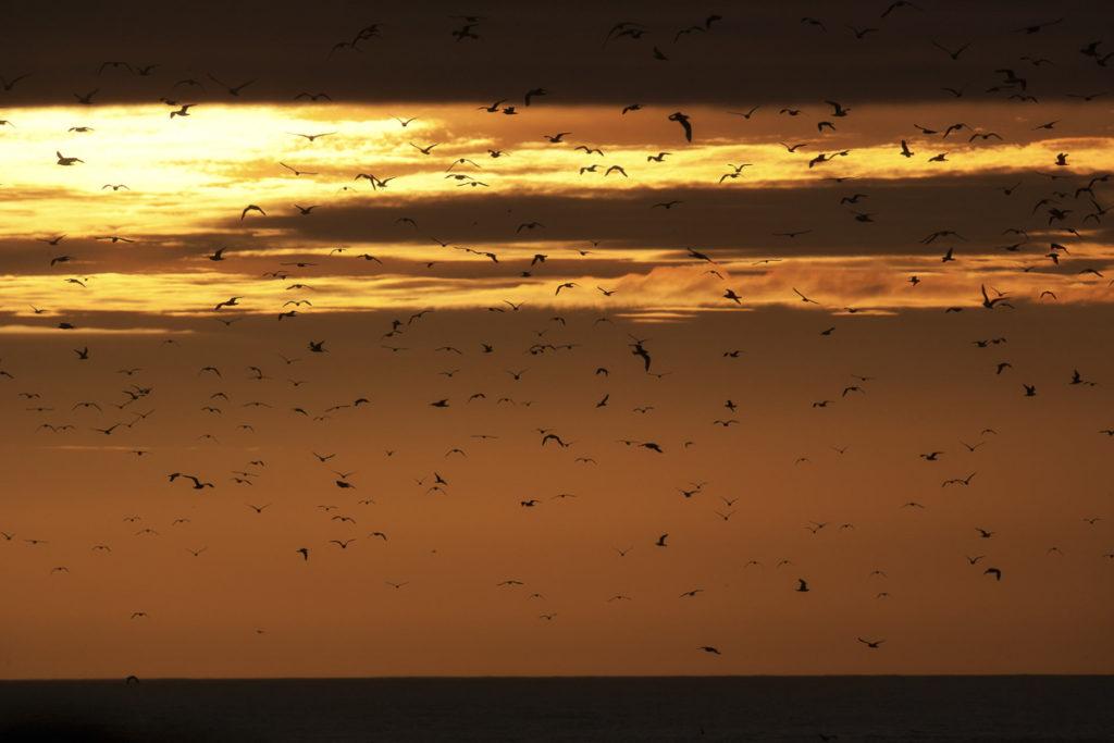 Birds in midnight light