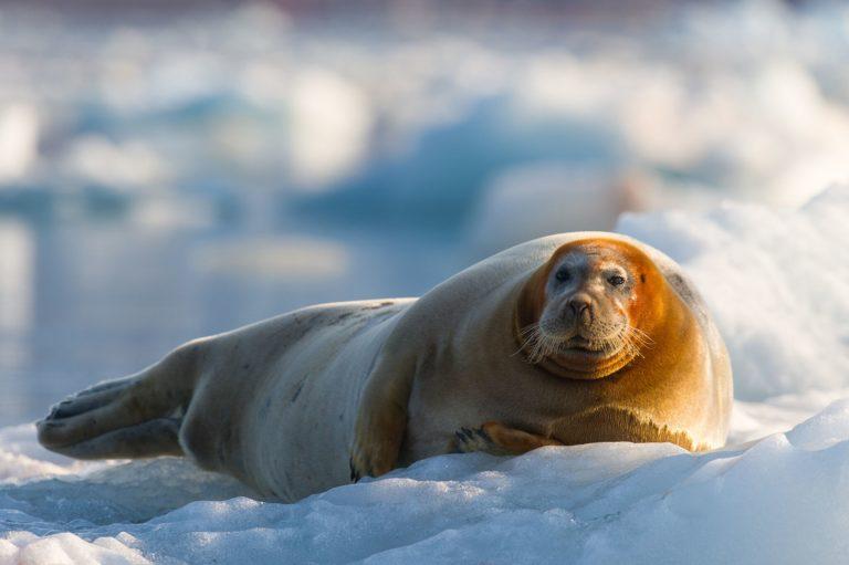 Mye dyreliv og lite menneskeliv på Isfjord Radio © Kirsti Ikonen