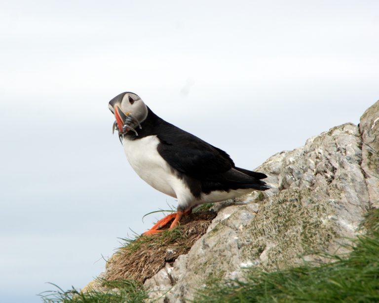 Heisann! På Hornøya kommer man svært nært fuglene © Are Olaussen