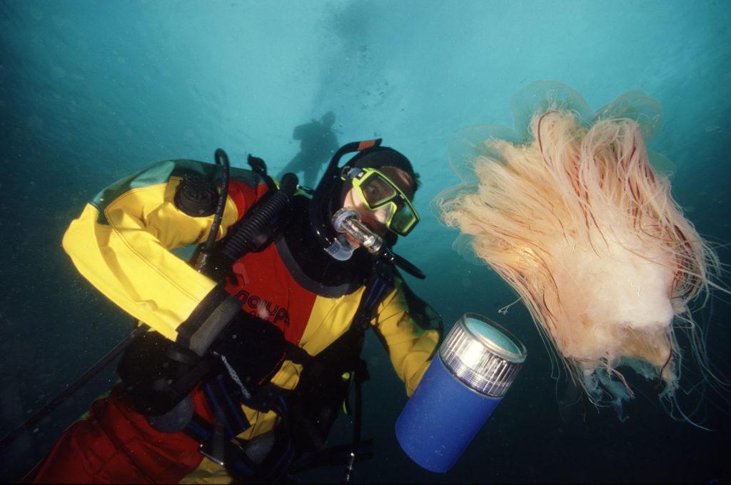 dykking i saltstraumen