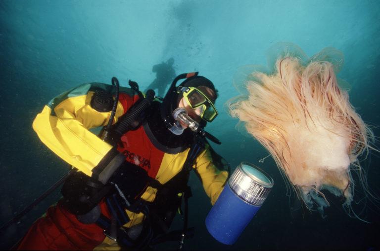 Dykking under overflaten i Saltstraumen © Vebjørn Karlsen