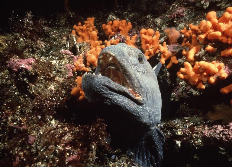Kjenner du arten? © Vebjørn Karlsen
