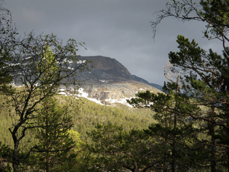 Through the trees the rocky exposed peaks tower into the skyline © Storjord Hotel
