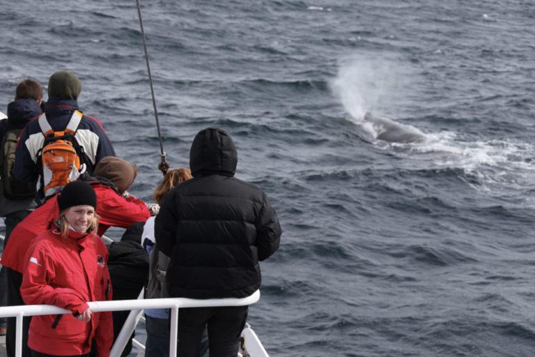 Alle er begeistret når hvalen er der © Roger Johansen