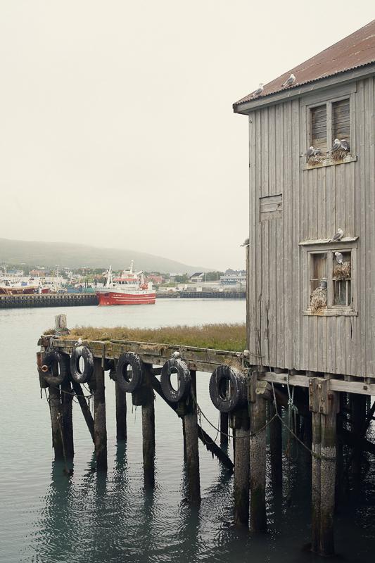 Måsen konkurrere med menneskene om ressursene i havet © FotoKnoff