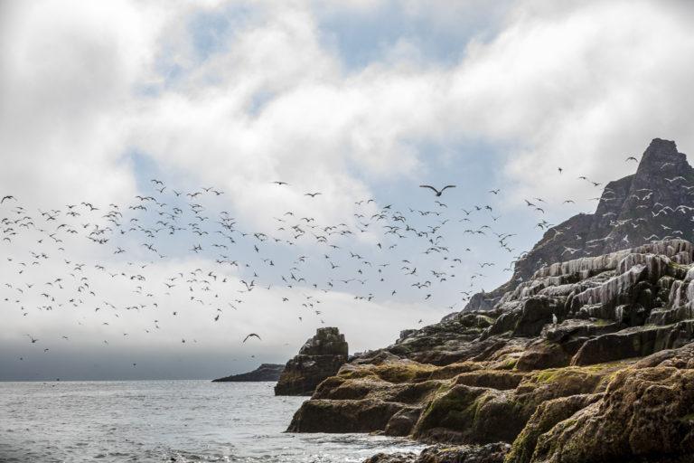 Her hekker også alke, lomvi, teist, skarv og havsule © FotoKnoff
