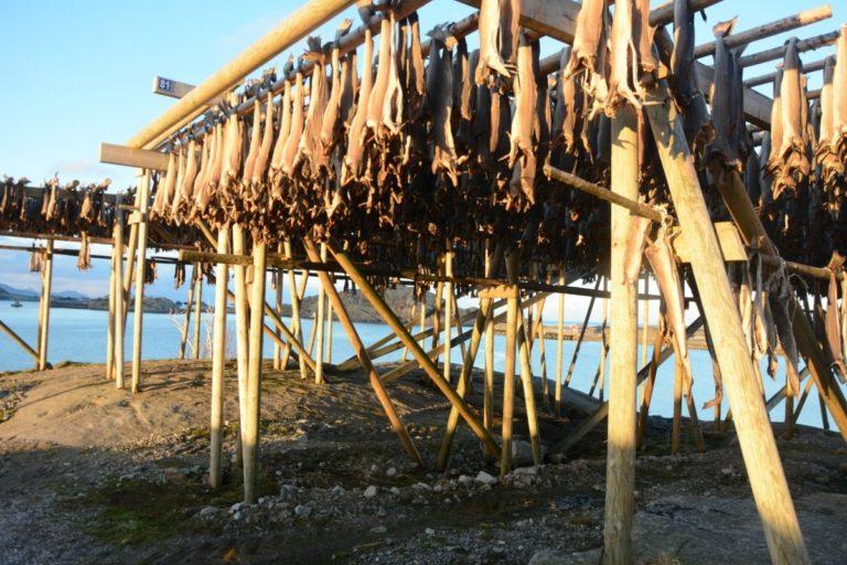 Stockfish © Knut Hansvold
