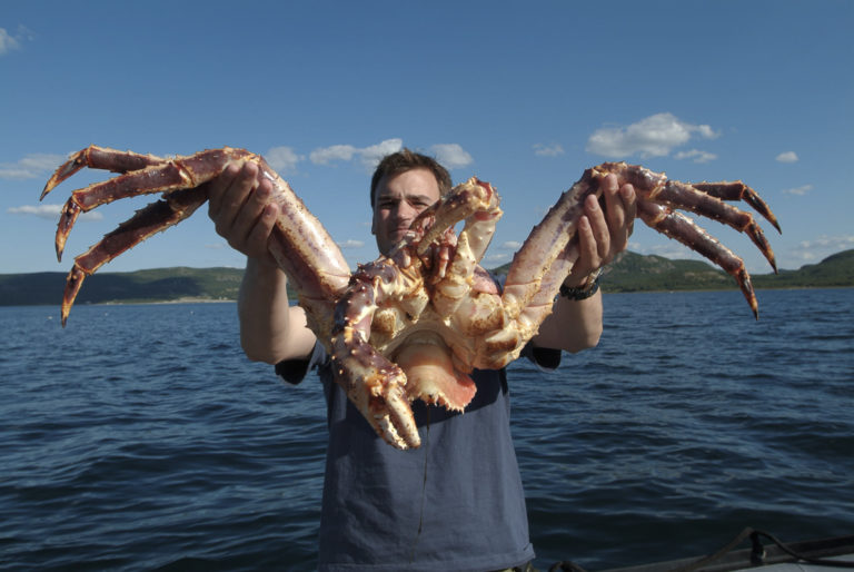 King crabs are giant monsters. But you can hold them easily © Trym Ivar Bergsmo