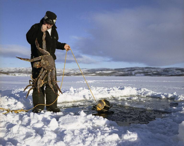 Dykking etter kongekrabbe i en råk i isen © Jørn Tomter