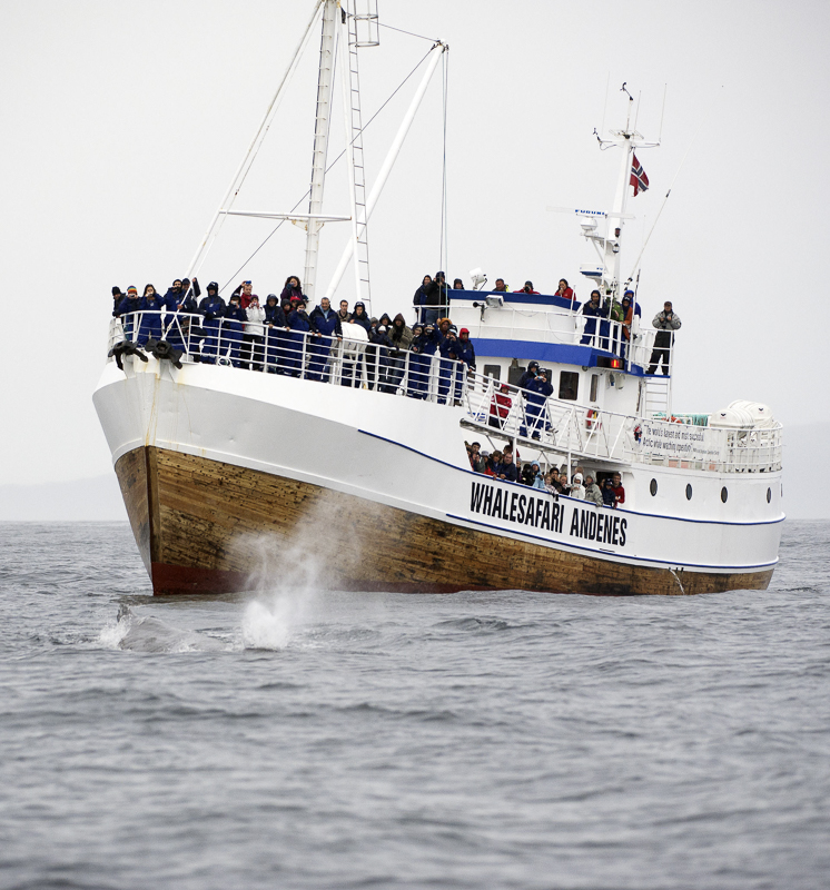 Heading out to see the whales © Marten Bril