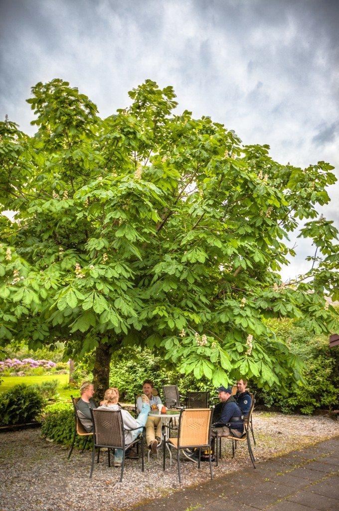 Store løvtrær gir skygge © Hildurs Urterarium